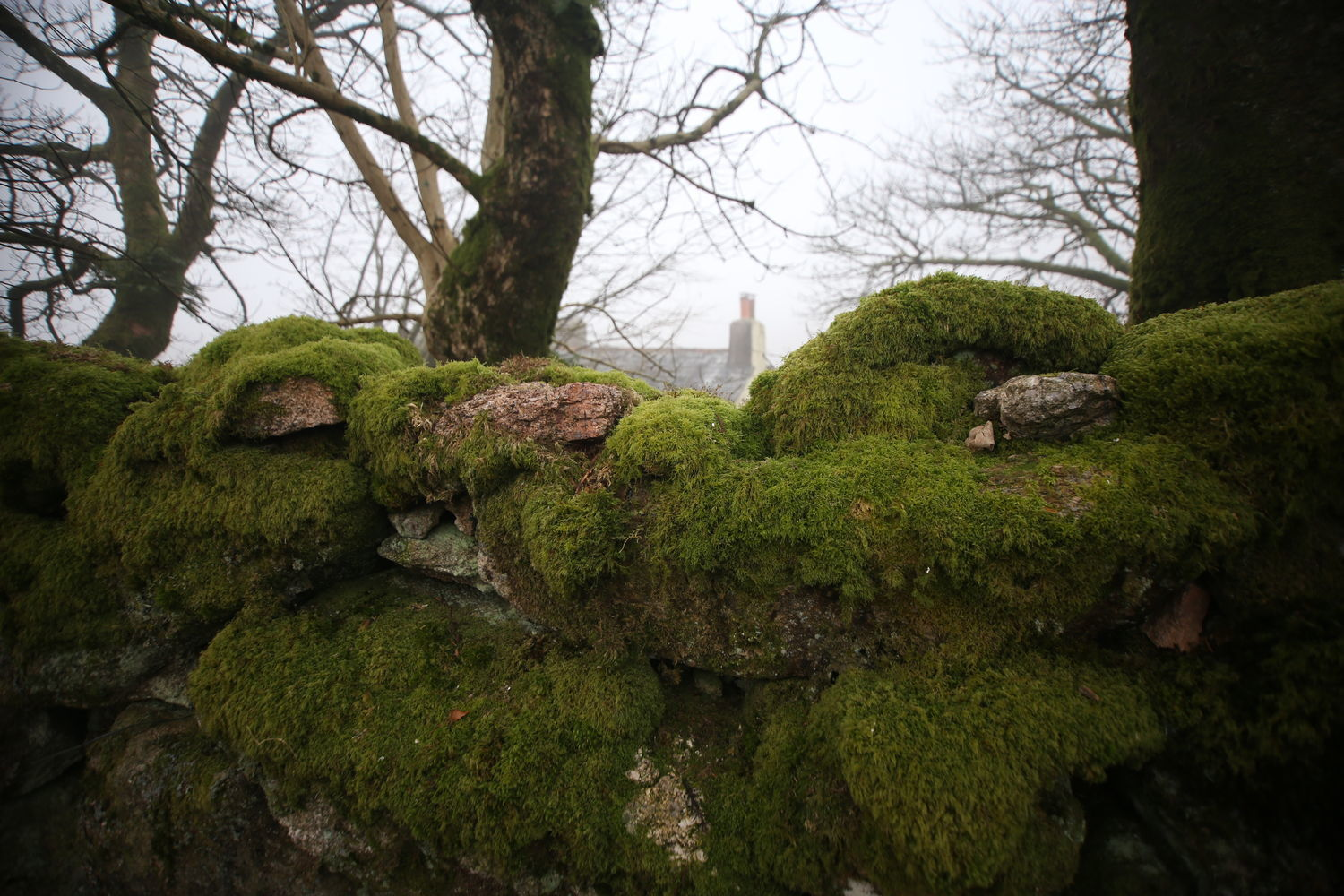 DARTMOOR green wall housing